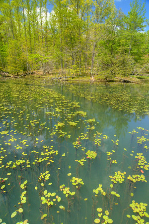 Hundreds of lily pads float on the surface of the lake at Bays Mountain Park and Planetarium in Kingsport, TN on Saturday, May 2, 2015. Copyright 2015 Jason Barnette