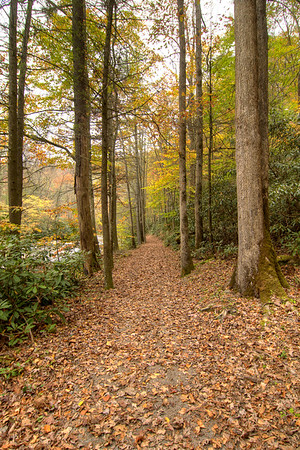 Fall leaves cover the ground on the Laurel Creek Trail along Highway 91 in Laurel Bloomery, TN on Monday, October 20, 2014. Copyright 2014 Jason Barnette