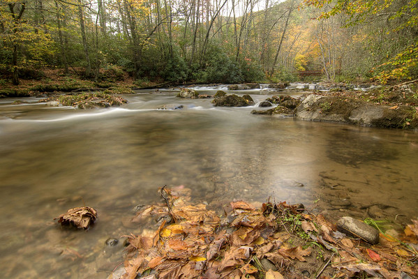 Fallen leaves surround the water on the Laurel Creek Trail along Highway 91 in Laurel Bloomery, TN on Monday, October 20, 2014. Copyright 2014 Jason Barnette