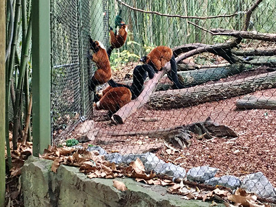 Nashville Zoo November 2019
