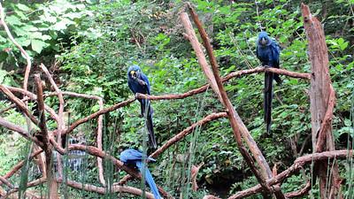 Nashville Zoo - September 18, 2014