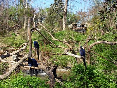 Nashville Zoo Macaws