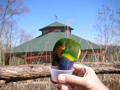 Nashville Zoo  Lorikeet Landing