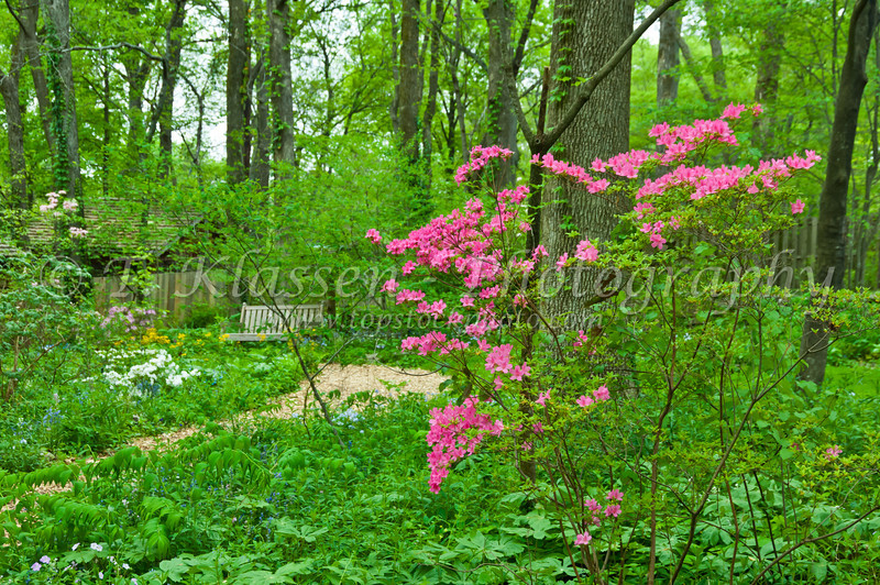 Spring flowers in the Cheekwood Botanical Gardens in Nashville, Tennessee, USA.