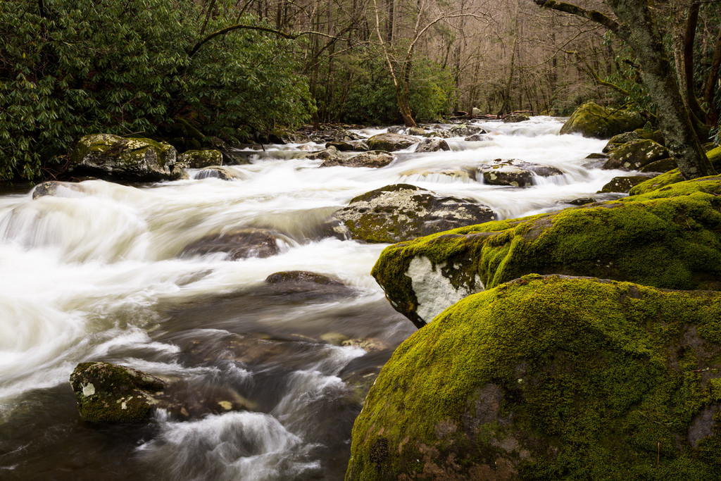 Moss Rocks by the River
