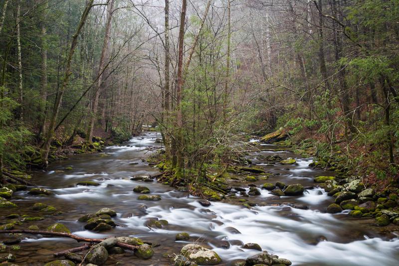 Laurel Creek in Spring