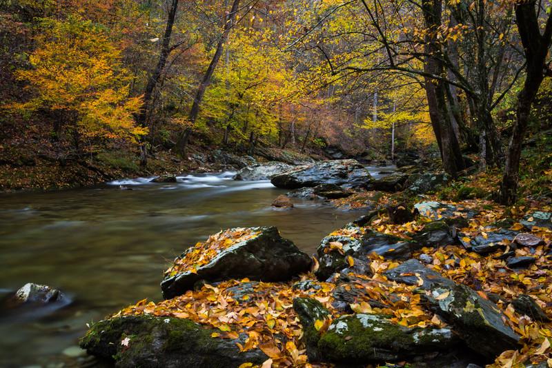 Little River Gold