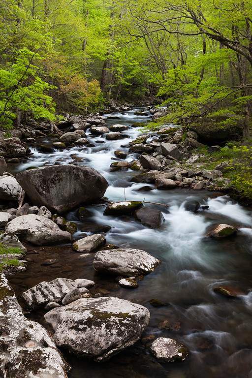 Intense green foliage surrounds the Middle Prong of the Little River. Great Smoky Mountains National Park, TN<br /> <br /> TN-120414-0007