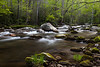 Early morning along the Little River near the Elkmont Campground. Great Smoky Mountains National Park, TN<br /> <br /> TN-120415-0011
