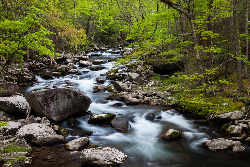 Intense green foliage surrounds the Middle Prong of the Little River. Great Smoky Mountains National Park, TN<br /> <br /> TN-120414-0002