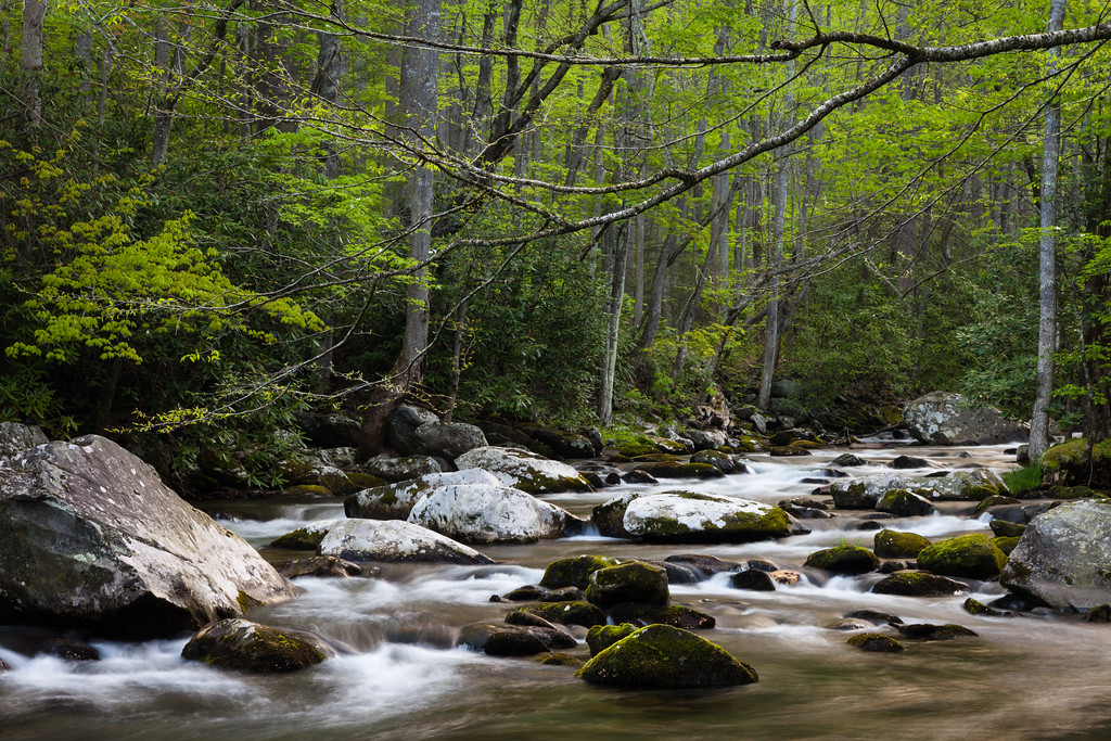 Early morning along the Little River near the Elkmont Campground. Great Smoky Mountains National Park, TN<br /> <br /> TN-120415-0015