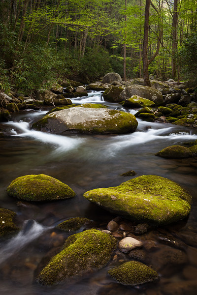 Moss covered rocks along Sam's Creek. Great Smoky Mountains National Park, TN<br /> <br /> TN-120414-0071