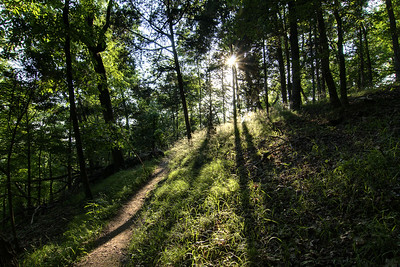 The sun peaks through the trees on the Point Lookout Trail at Panther Creek State Park in Morristown, TN on Tuesday, May 28, 2013. Copyright 2013 Jason Barnette