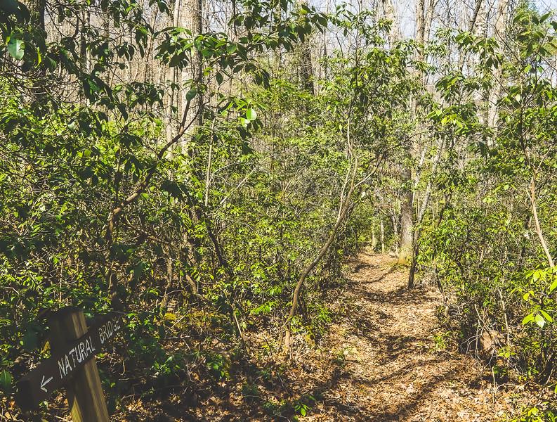 Pickett CCC Memorial State Park in Jamestown Tennessee