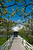 Blossoming apple trees and fenced walkway in Pigeon Forge, Tennessee, USA.