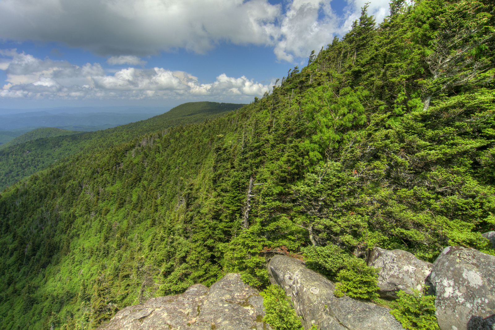 The view of windswept trees and the continuing mountain range from the scenic overlook on Roan High Bluff on Roan Mountain near the town of Roan Mountain, TN on Sunday, June 14, 2015. Copyright 2015 Jason Barnette Roan Mountain straddles the border between the towns of Roan Mountain, Tennessee and Bakersville, North Carolina. The top of the mountain is known for having the largest natural rhododendron gardens in the country, maintained and operated by the National Forest Service. The recreation area includes hiking trails, the gardens, scenic overlooks, and the Appalachian Trail.