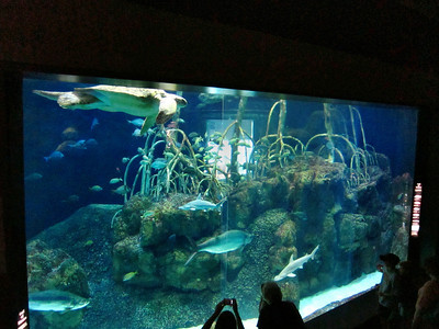 River Journey Aquarium