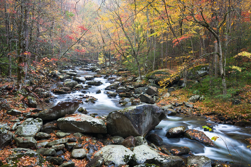 GSM 065<br /> <br /> The Middle Prong of the Little River flows through a pristine autumn landscape in Great Smoky Mountains National Park, Tennessee, USA.