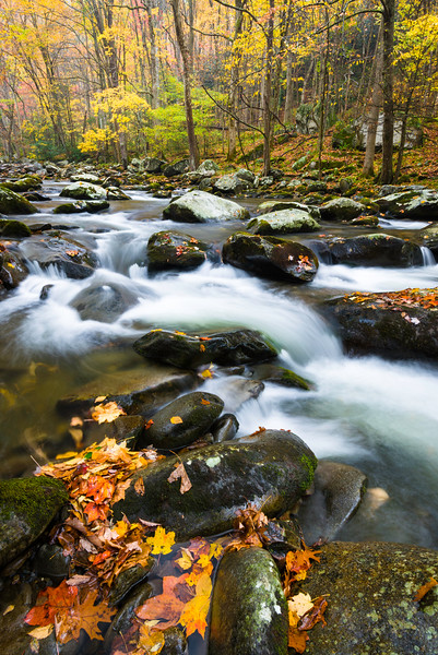 GSM 053  <br /> Autumn leaves collect among the boulder stream bed of the Middle Prong of the Little River, Great Smoky Mountains National Park, Tennessee.