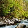 GSM 011                       <br /> Morning light on the Middle Prong of the Little River, Great Smoky Mountains National Park, Tennessee.
