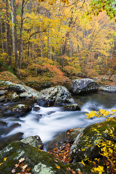GSM 061<br /> <br /> The Middle Prong of the Little River flows through a pristine autumn landscape in Great Smoky Mountains National Park, Tennessee, USA.