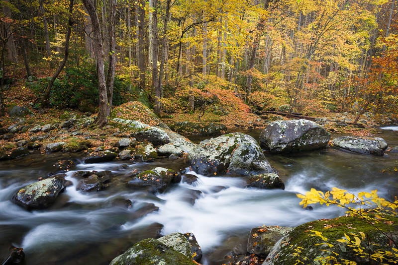 GSM 062<br /> <br /> The Middle Prong of the Little River flows through a pristine autumn landscape in Great Smoky Mountains National Park, Tennessee, USA.