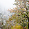 GSM 059<br /> An early autumn snowfall blankets the Appalachian Mountains in Great Smoky Mountains National Park, Tennessee.