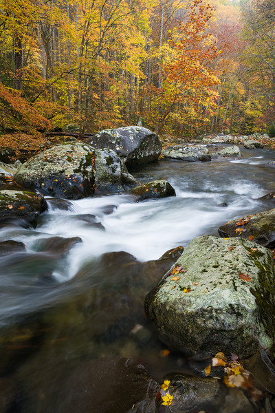 GSM 064<br /> <br /> The Middle Prong of the Little River flows through a pristine autumn landscape in Great Smoky Mountains National Park, Tennessee, USA.