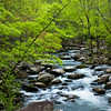 GSM 019                         <br /> Morning light on the Middle Prong of the Little River, Great Smoky Mountains National Park, Tennessee.