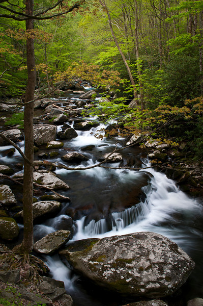 GSM 017 <br />            <br /> Morning light on the Middle Prong of the Little River, Great Smoky Mountains National Park, Tennessee.