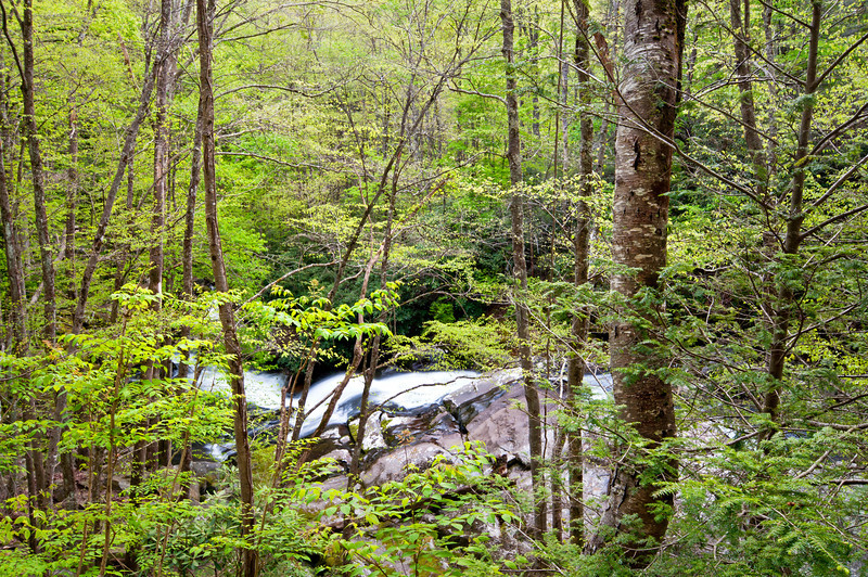 GSM 043                         <br /> The Middle Prong of the Little River winds it's way through Smoky Mountains National Park near Townsend, Tennessee.