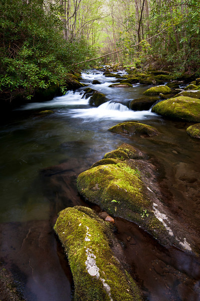 GSM 015                        <br /> Afternoon light on the Middle Prong of the Little River, Great Smoky Mountains National Park, Tennessee.