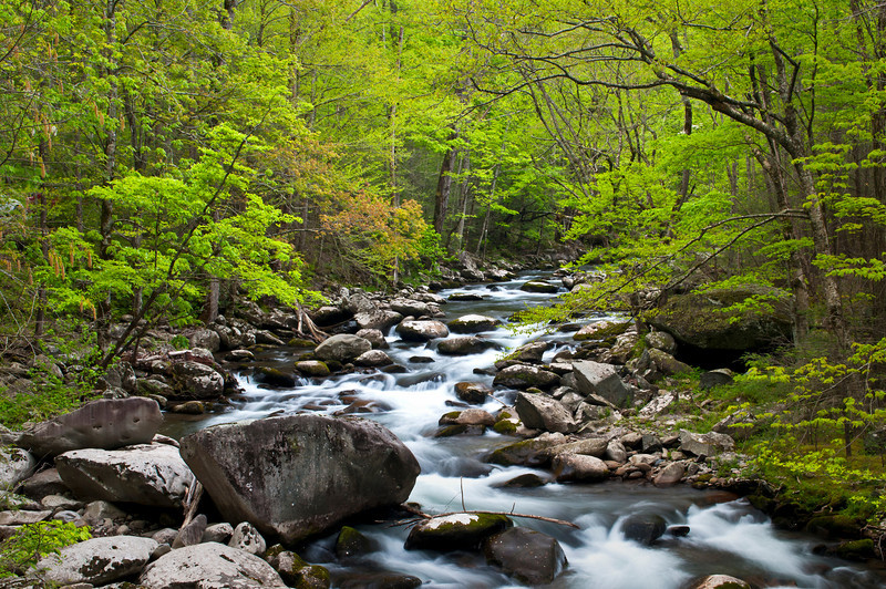 GSM 021                       <br /> Morning light on the Middle Prong of the Little River, Great Smoky Mountains National Park, Tennessee.