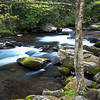 GSM 045                          <br /> Early morning on the Middle Prong of the Little River, Great Smoky Mountains National Park, Tennessee.