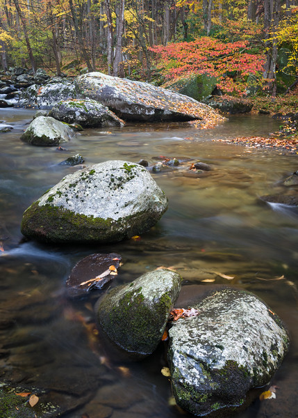 GSM 063<br /> <br /> The Middle Prong of the Little River flows through a pristine autumn landscape in Great Smoky Mountains National Park, Tennessee, USA.