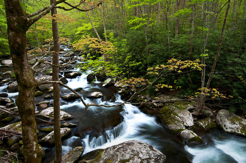 GSM 018                           <br /> Morning light on the Middle Prong of the Little River, Great Smoky Mountains National Park, Tennessee.