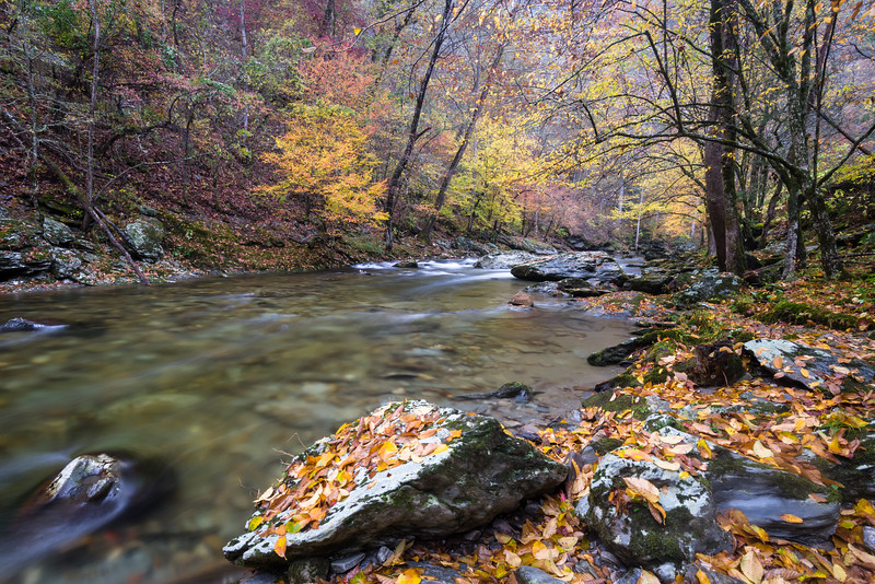 GSM 068<br /> <br /> The Middle Prong of the Little River flows through a pristine autumn landscape in Great Smoky Mountains National Park, Tennessee, USA.