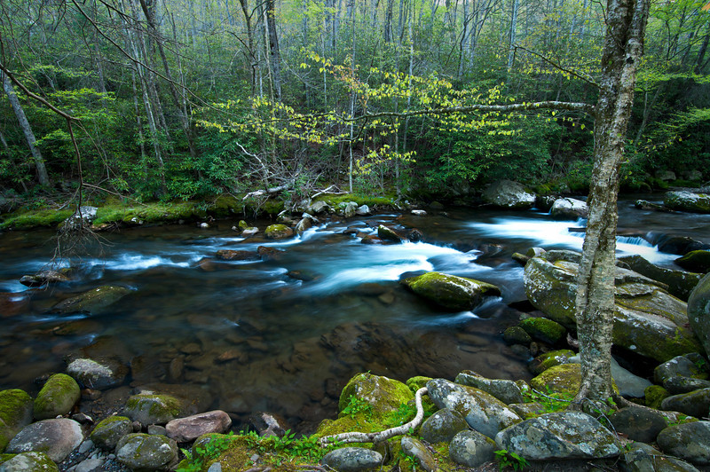 GSM 040                        <br /> Early morning on the Middle Prong of the Little River, Smoky Mountains National Park, Tennessee.