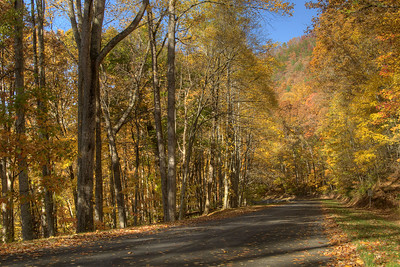 Brilliant fall colors along the unmarked road leading to the Watauga Lake Visitors Center near Hampton, TN on Friday, November 1, 2013. Copyright 2013 Jason Barnette