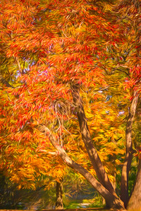 Graphic of Fall Tree