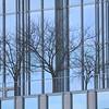 Tree Refletions