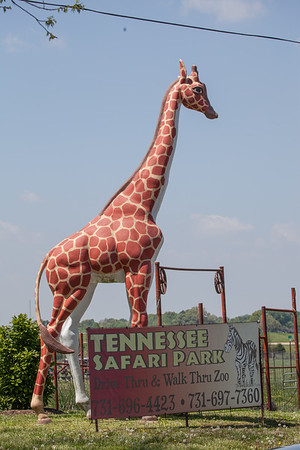 Safari-Park-April-2016