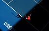 Andy Murray, Australian Open, 2012