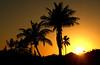 Sunset, Key Biscayne, 2011