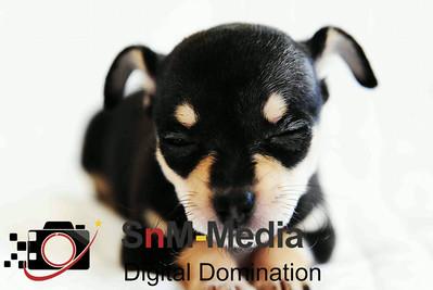 Super Cute Puppy Basil
