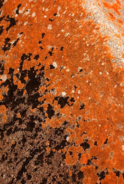 Lichen Rock 3