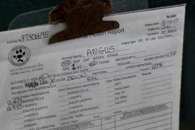 ANGUS (REAL NAME -CASH)