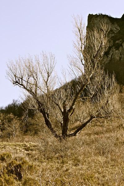 Sur les pentes du Pic de Bugarach