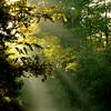 Lumière matinale en Sologne