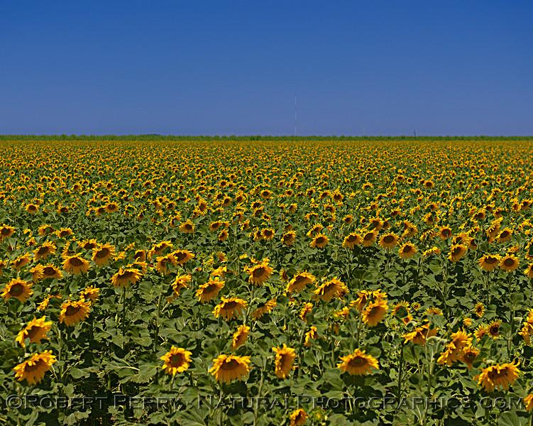 Field in Yolo County